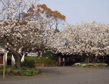 【福岡の穴場デートスポット!】能古島でのんびりお散歩デート!