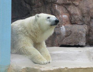 【静岡・清水】大人気・日本平動物園、徳川家康を祀った久能山東照宮を巡る!日帰りおでかけプラン