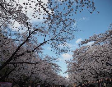 【東京・上野】今年の春はどこに行こう?オススメ桜スポット!上野公園♪(イベント情報あり)