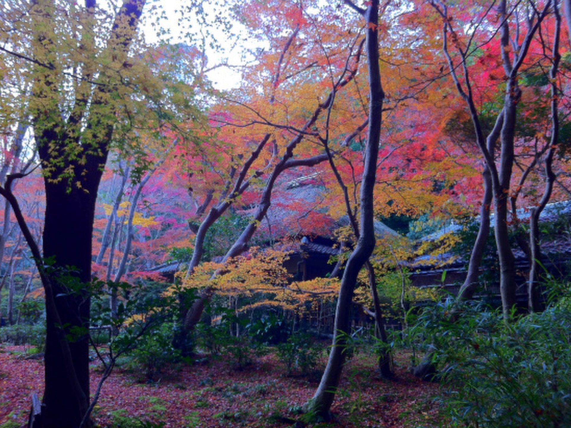 【京都嵐山】絶対行きたい紅葉の名所&名物スイーツ10選 穴場もあるよ!