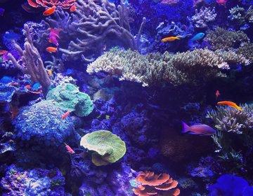【夏は水族館デートに決まり!】カップル必見!人気観光名所シアトル水族館でおすすめペアルックデート♡