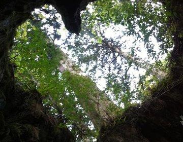 【屋久島で九州一綺麗な日の出を】ハ-トが見れる秘密スポット