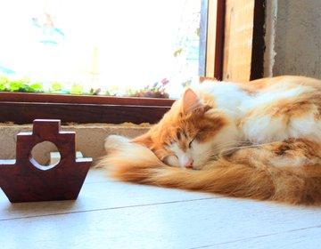 【絶景・穴場】猫と○のコラボ!とあるマニアに大人気!全く新しい猫カフェって?