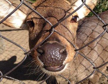 宮崎県唯一の動物園「フェニックス自然動物園」