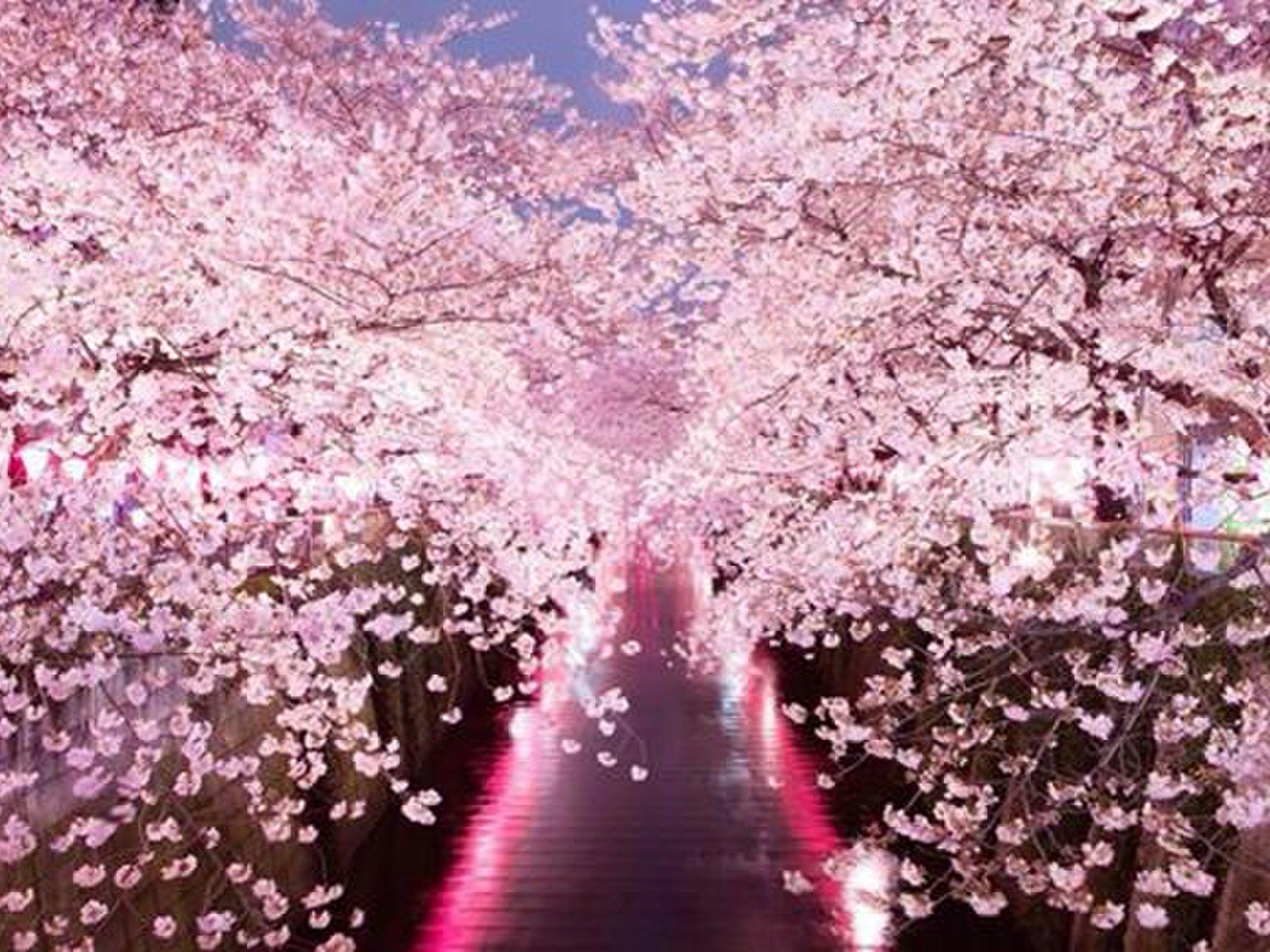多忙カップルさん向け!中目黒で夜桜デートなんて良くないですかっ?!