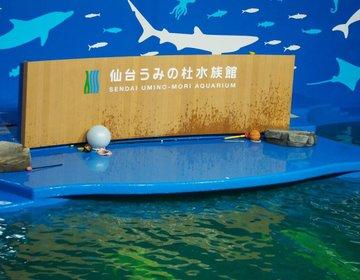 【外れなしのTHE・王道仙台デートプラン】仙台うみの杜水族館からのお洒落ディナー!