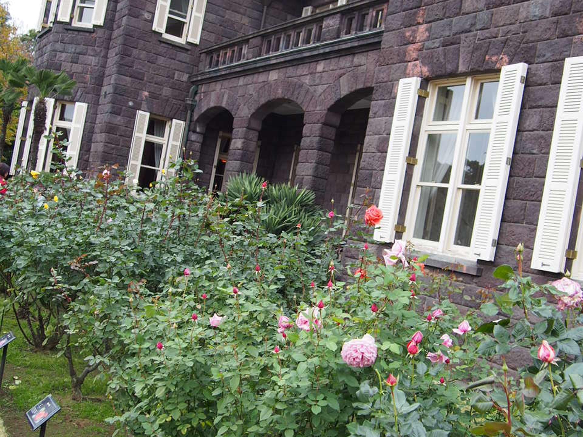 【薔薇と紅葉が一緒に楽しめる旧古河庭園★】大人150円で楽しめる東京の公園★