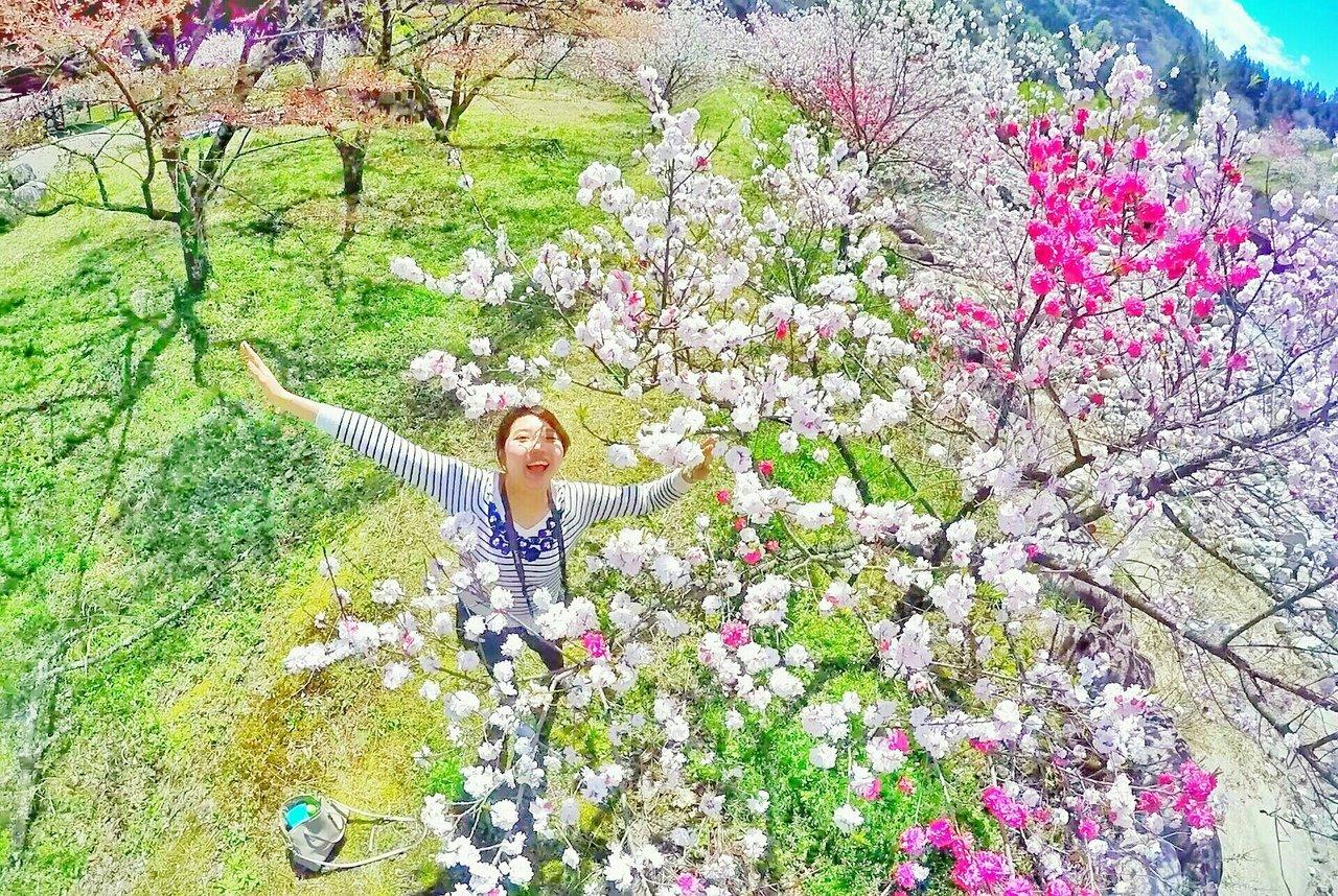 月川温泉の花桃(花桃の里)