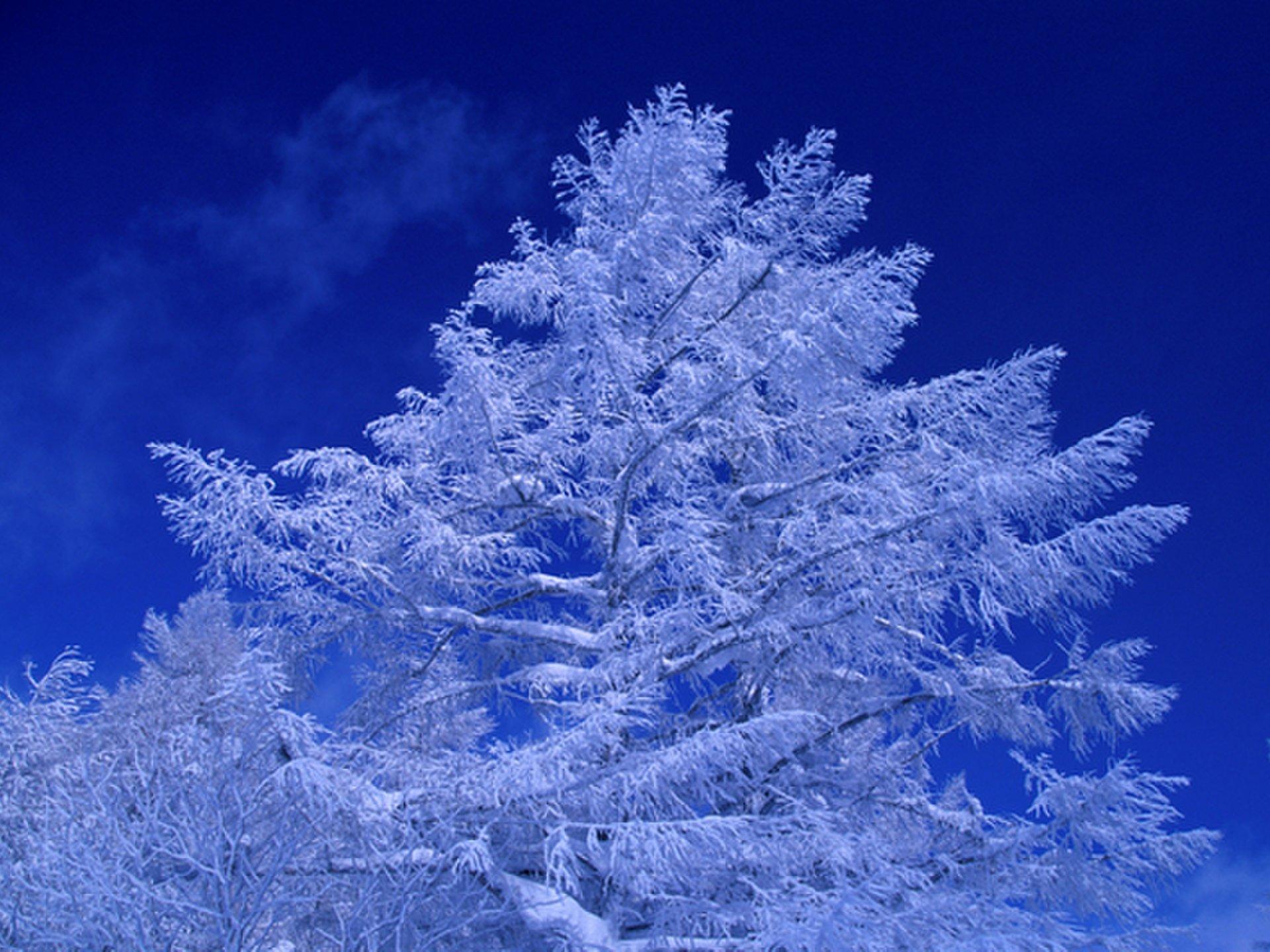 【雲海テラスが霧氷テラスに変身!】北海道・トマム 霧氷を楽しみながら、霧氷コーヒを飲む!