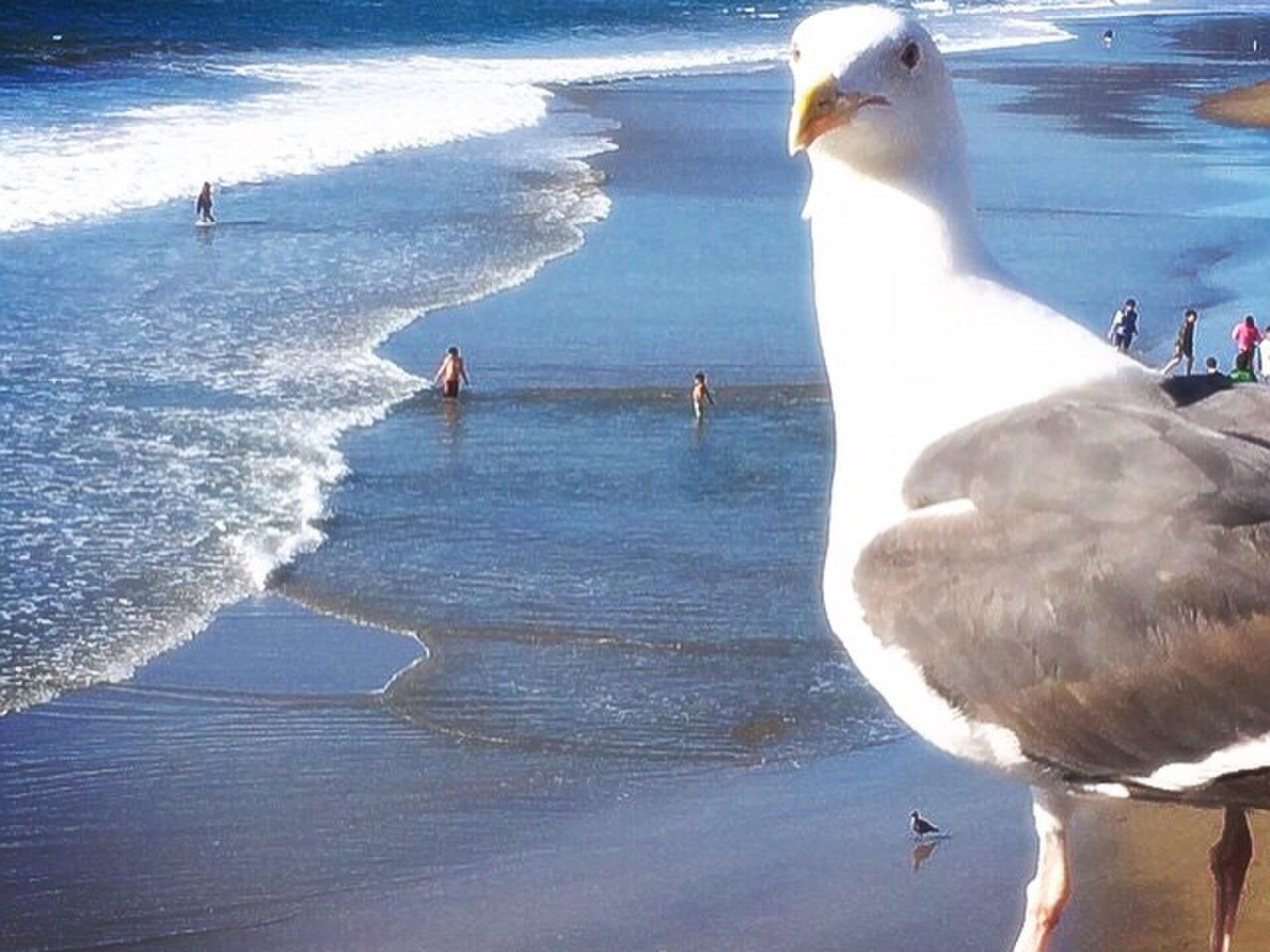 開放的な街!LAのサンタモニカで行きたいおすすめの人気観光スポット☆