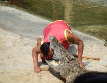 バンコクに危険すぎる観光スポット!約8万匹のワニがいる「クロコダイルファーム」