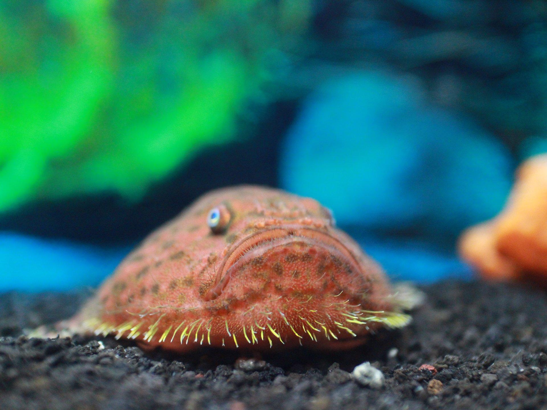 沼津港深海水族館をみて、駿河湾の魚介を食し、日本一巨大な水門から絶景【活けいけ丸、びゅうお、セリ】