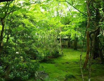 京都の青もみじ、決定版。鮮やかな緑がフォトジェニック、叡山電鉄で巡る京都の夏6選!