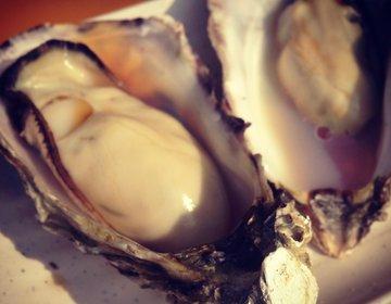 【日本三景 松島】美しすぎる景色と、ホタテや海鮮丼を楽しみに行こう!