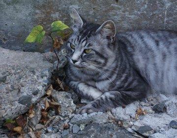 猫島に行こう!ネコ好きにはたまらにゃい♪猫いっぱいの島【宮城・田代島】