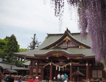 """【茨城・笠間】まさにいまが見頃!日本三大稲荷""""笠間稲荷神社""""で珍しい藤を愛でよう♪"""