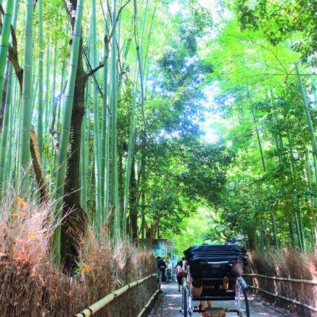 嵯峨野 竹林の道