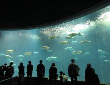 東京・葛西臨海公園で楽しむピクニックとマグロ水族館!春のデートにおすすめ