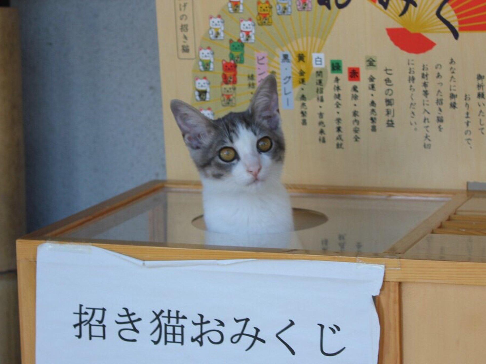 【猫好き♡】2ch.で噂のぬこでらは本当に存在した!ニャンともかわいいおみくじ猫に会いに行こう!