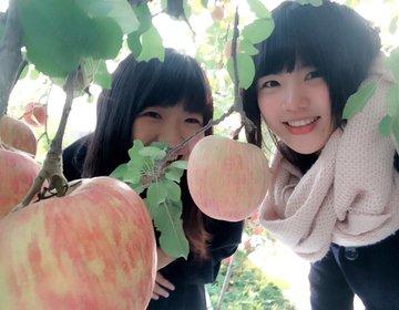 福島県国見町で「りんご狩り体験」美味しすぎるりんごの狩り方を伝授♡