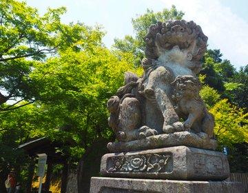 【足羽神社】しだれ桜とコマイヌに注目◎福井市内の超パワースポットへ行ってきました。