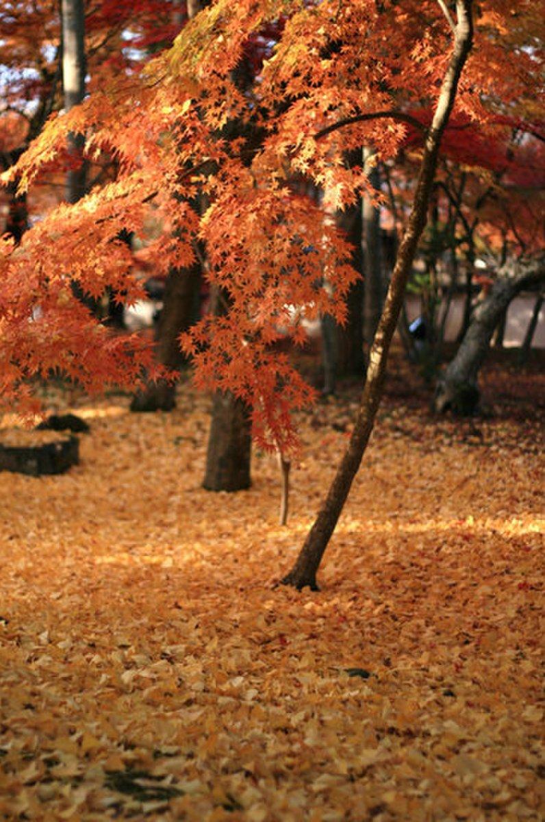 永観堂(禅林寺)