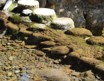 清らかな流れで清々しい気分に。国分寺の秘境、お鷹の道・真姿の池湧水群。