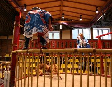 高知県・桂浜 竜馬像を見て、とさいぬパークで闘犬を鑑賞し、桂浜水族館へ! My遊バスで観光。