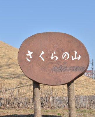 成田市さくらの山