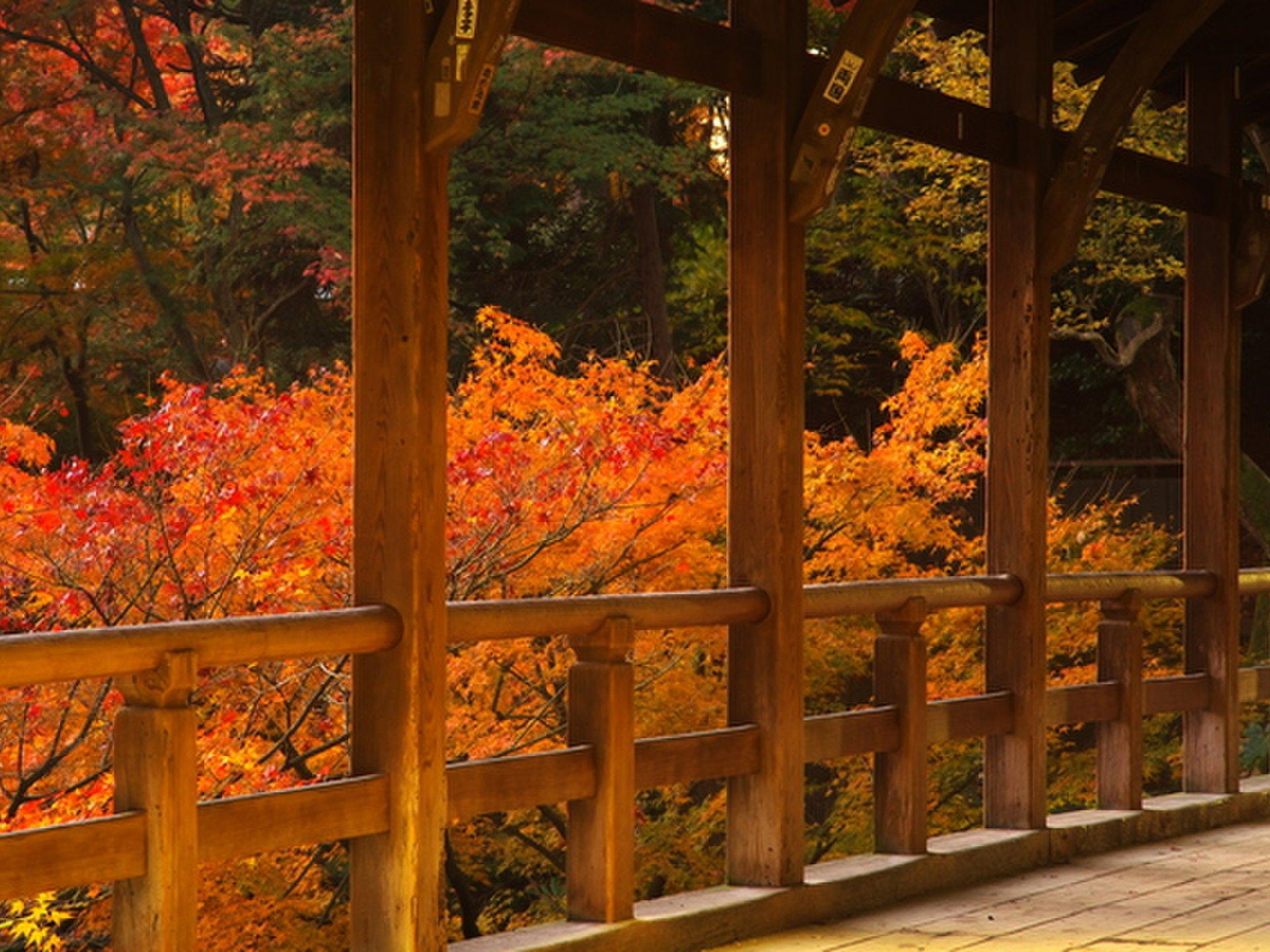 【京都・南エリアを自転車で観光】東寺、東福寺、伏見稲荷で庭園&紅葉を楽しんで、フレンチ懐石に舌鼓!