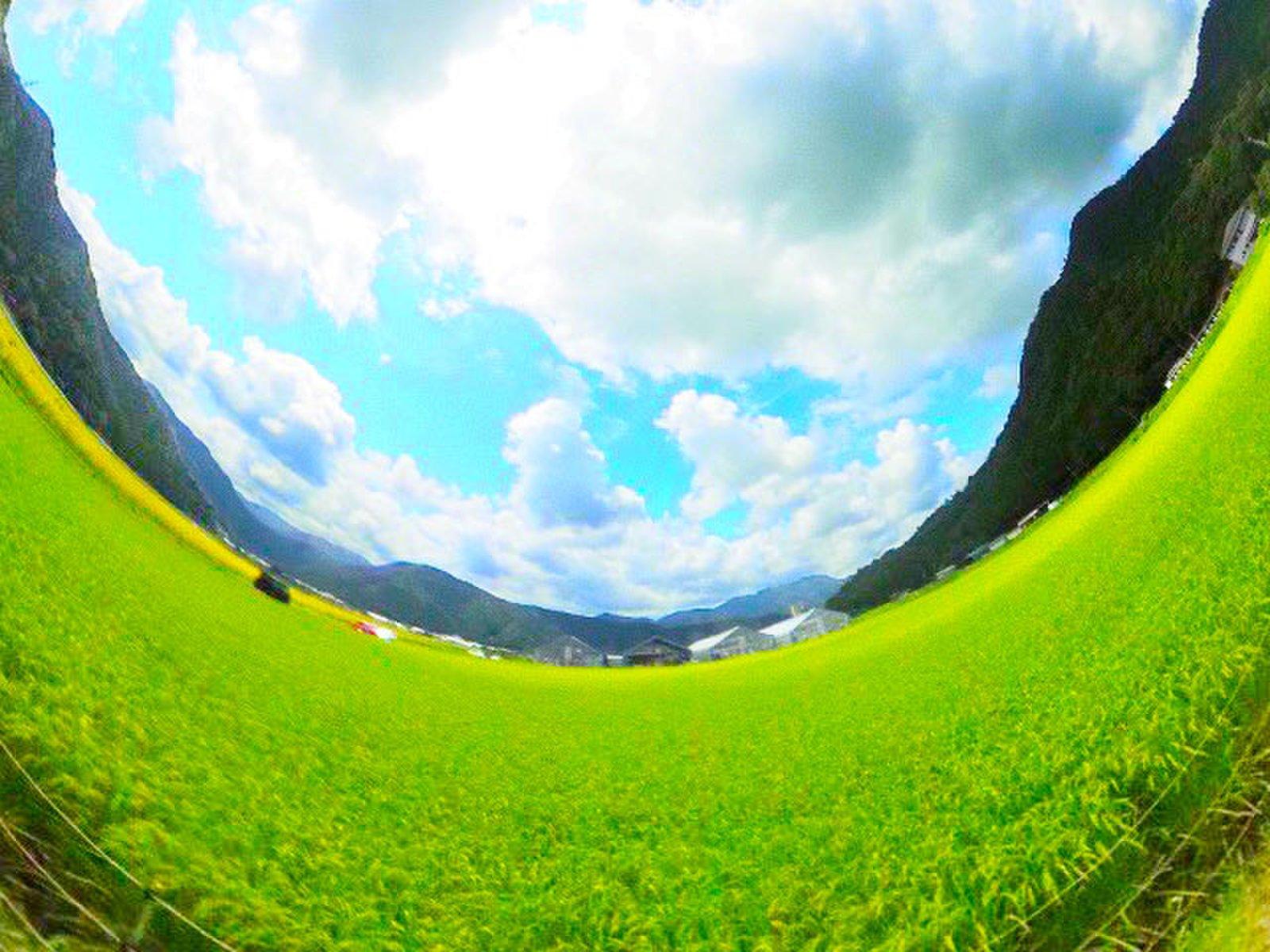 若狭小浜 恵のひまわり畑(福井県)