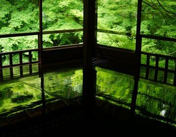 京都 SNSで今話題の【瑠璃光院】期間限定、春の特別拝観へ!