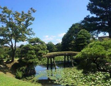 春は桜、秋は紅葉、冬は雪と四季を楽しむ観光地!岡山・津山の大名庭園「衆楽園」夏は池に広がるスイレン。