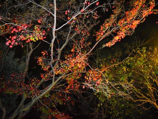 京都四條 南座