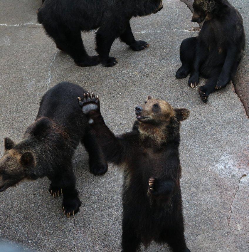 昭和新山熊牧場