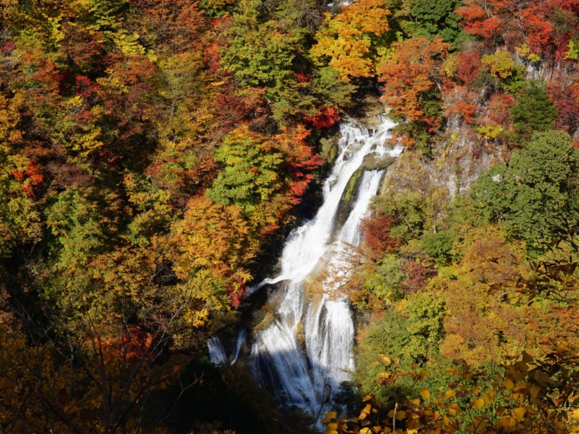 【明亮的红色的秋天~Tsuketashita♪】日光的秋叶开始的受欢迎的旅游景点!