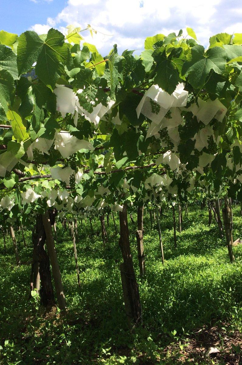 ぶどうの丘 地下ワインカーヴ