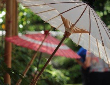 雅な雰囲気に浸れる、上野東照宮 春のぼたん祭り