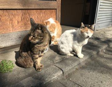 【2月22日はネコの日】猫のいる浅草橋ふらっとお散歩。可愛い猫と神社でご利益アップデート❤️