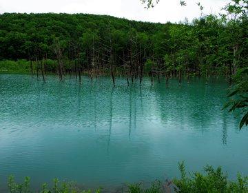 青い池と、お花畑と、アルパカさん。富良野、美瑛、旭川を日帰りで楽しもう!