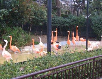 【大阪の大人気観光スポット!】大阪にいったら絶対にいかなあきまへん!天王寺動物園へいこう!