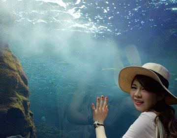 江ノ島で究極に美味しい「しらす丼」江ノ島・デート【水族館・デート・おすすめ】