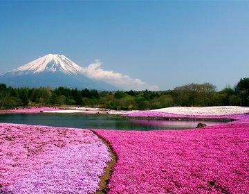 山梨県・富士山ドライブ 樹海・こうもり穴・湖を探検!桜と芝桜の絶景【忍野八海、本栖湖、ゆらり】