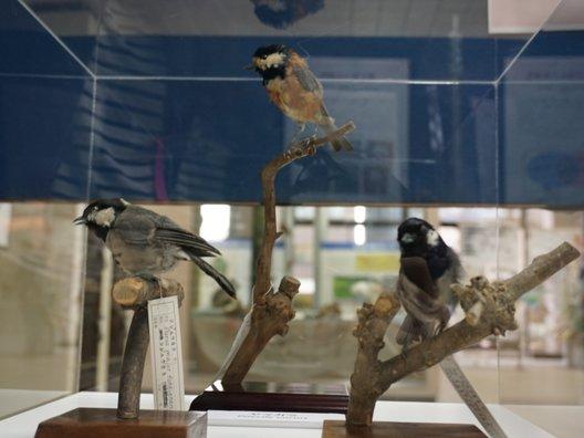 国立科学博物館附属自然教育園