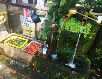 【熊本県*いいとこどりな阿蘇ドライブ】名物牛や熊本ラーメン、阿蘇神社周辺巡りの旅
