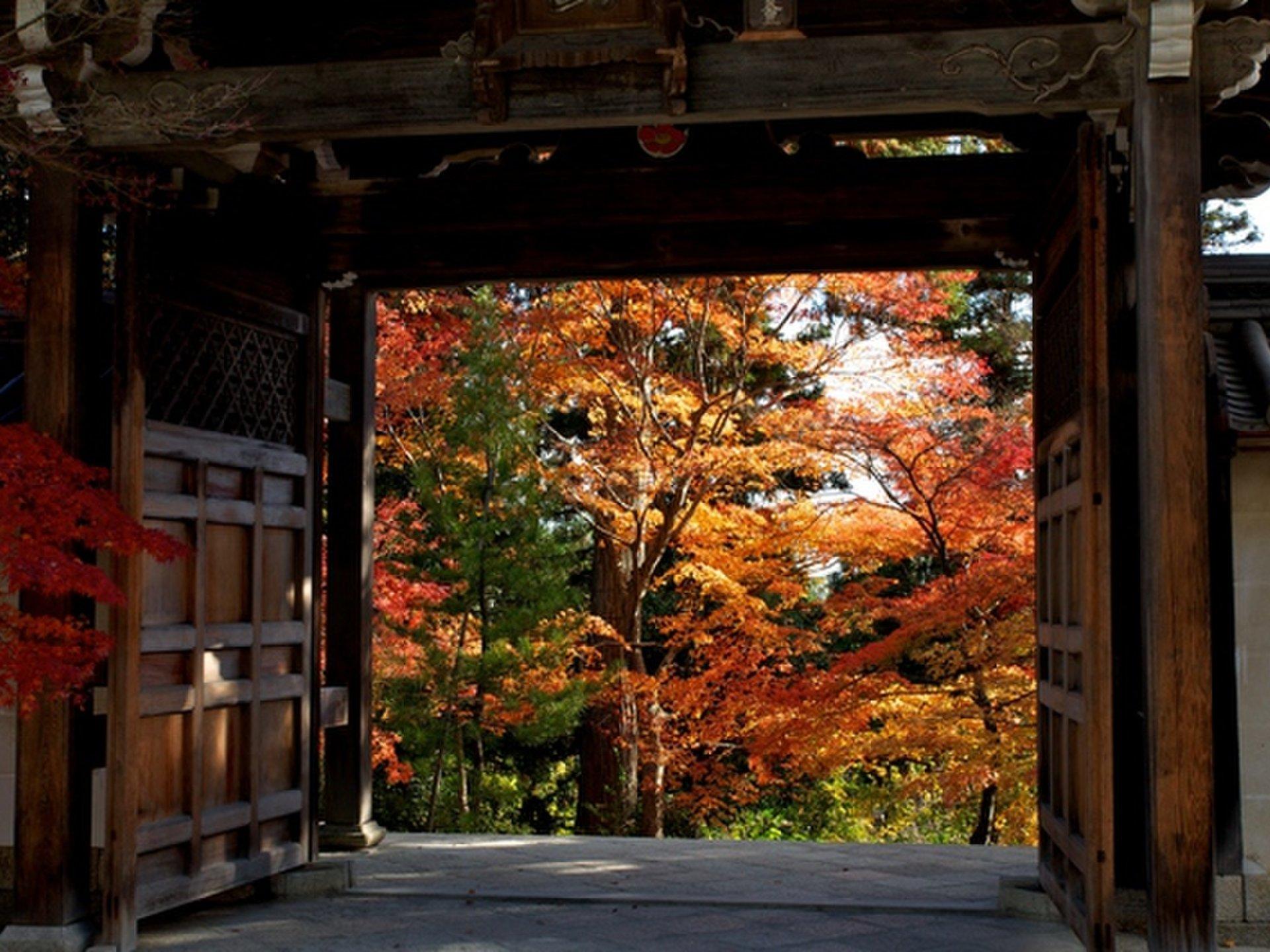 【京都で楽しむ紅葉】秋になったら気軽に行きたいおすすめスポット6選
