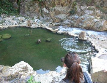 【旅猿ロケ地巡り】野猿を撮ろうの旅②地獄谷温泉