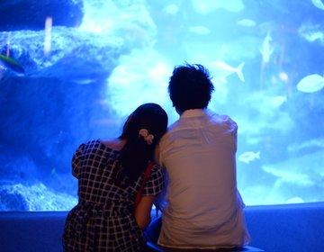 【動物園と水族館の東武沿線動物ふれあいデート】最後はすみだ水族館でペンギンとホタルに癒やされる!