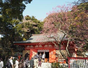 【鎌倉さんぽ】早春の花と言えば梅!早咲きの梅と荏原天神社のコラボ♪限定のお守りもGETしよう!