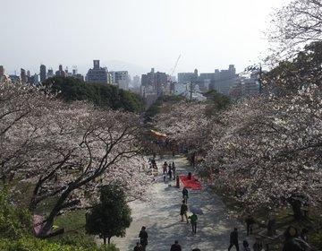 いよいよ満開!定番から穴場まで!福岡市の桜の名所巡り